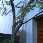 RC住宅のコラム-ニッポンでの外断熱改修-写真7